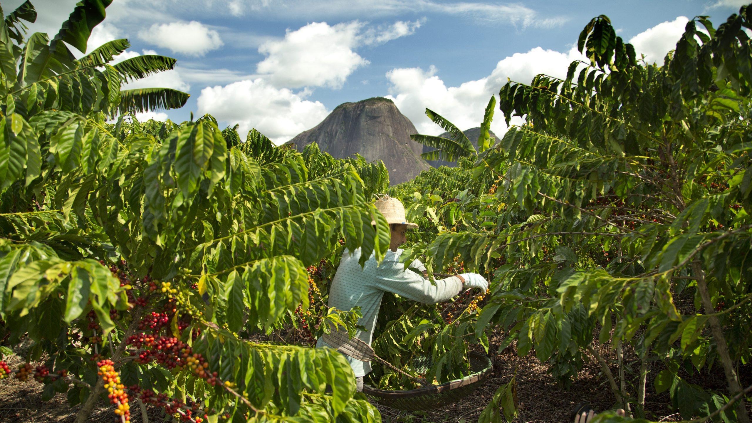 Nestlé supports transition to a regenerative food system